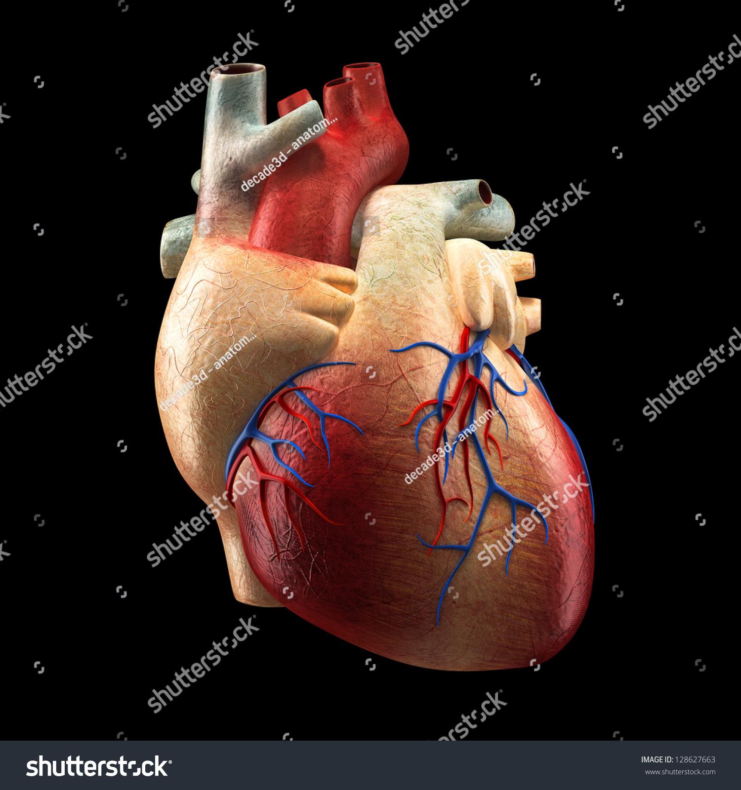 Real Heart Isolated On Black Human Stock Illustration 128627663