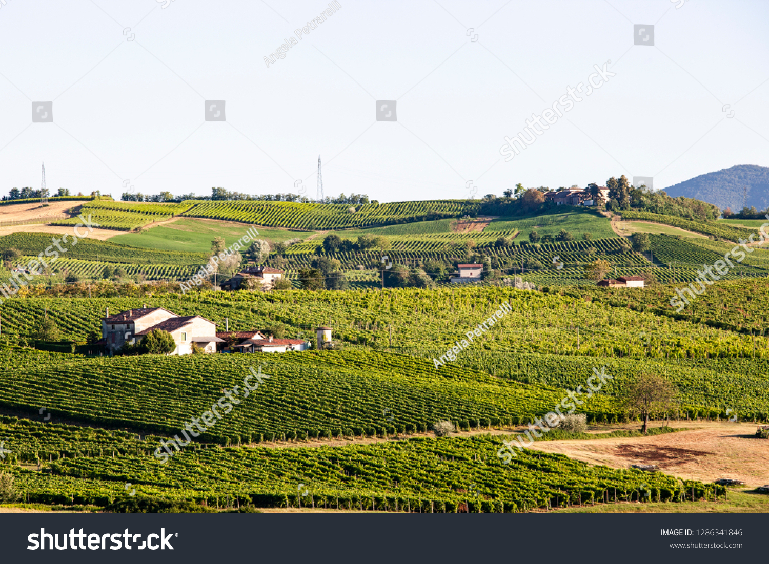 Summer Hilly Landscape Vineyards Northern Italy Stock Photo