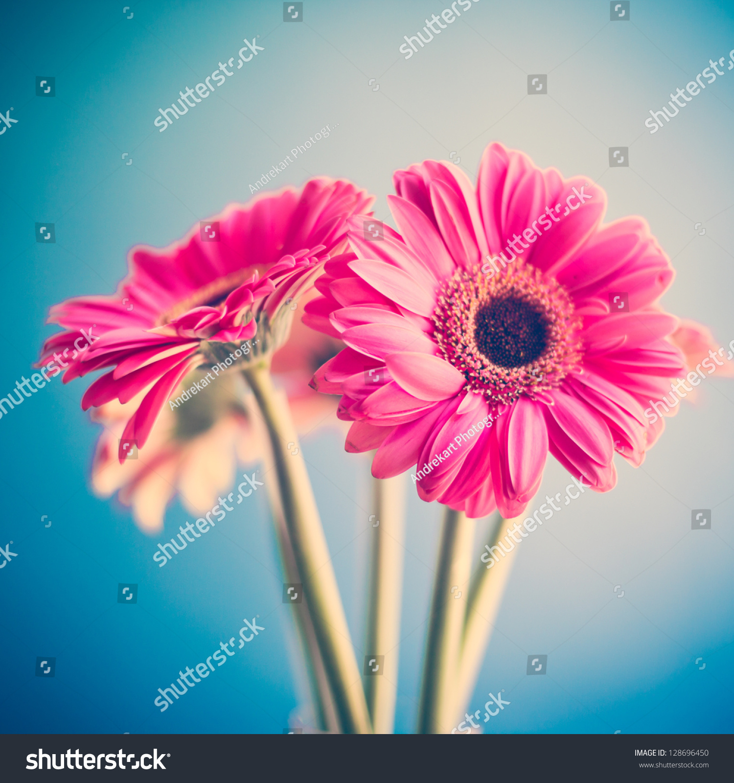 Two Pink Flowers Stock Photo Edit Now 128696450 Shutterstock