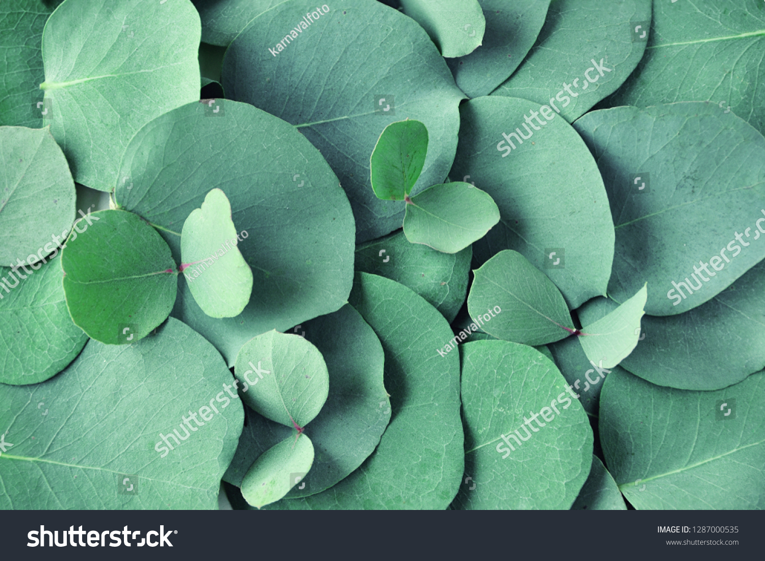 Fresh eucalyptus leaves. Flat lay, top view. Nature green Eucalyptus leaves  background  #1287000535