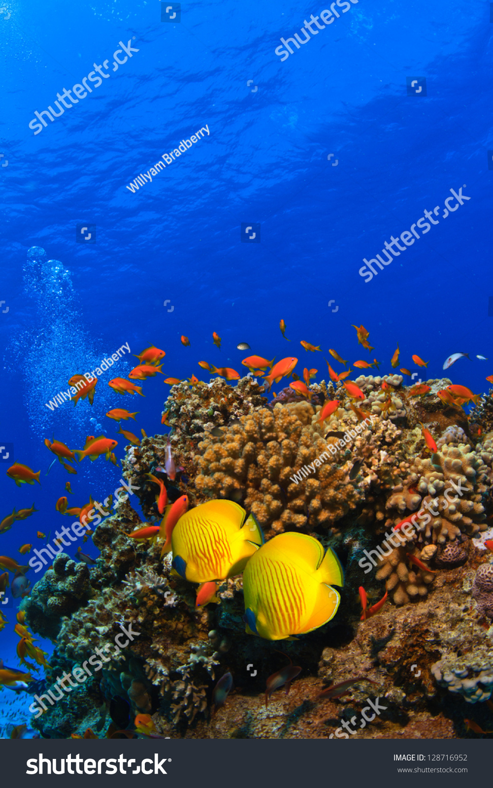 Delighted Coral Reef Template Contemporary - Example Resume and ...