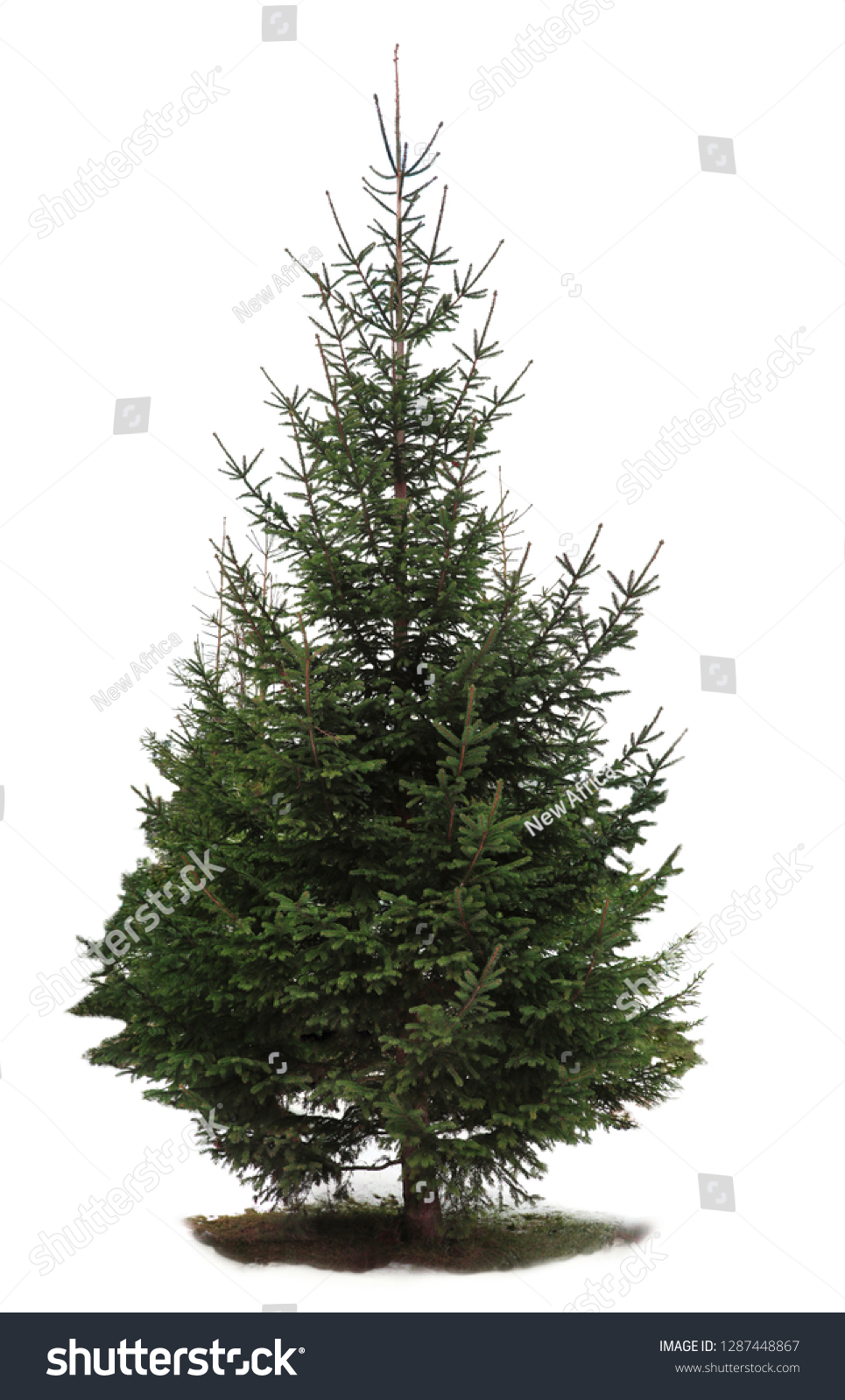 Beautiful fir with green branches on white background #1287448867