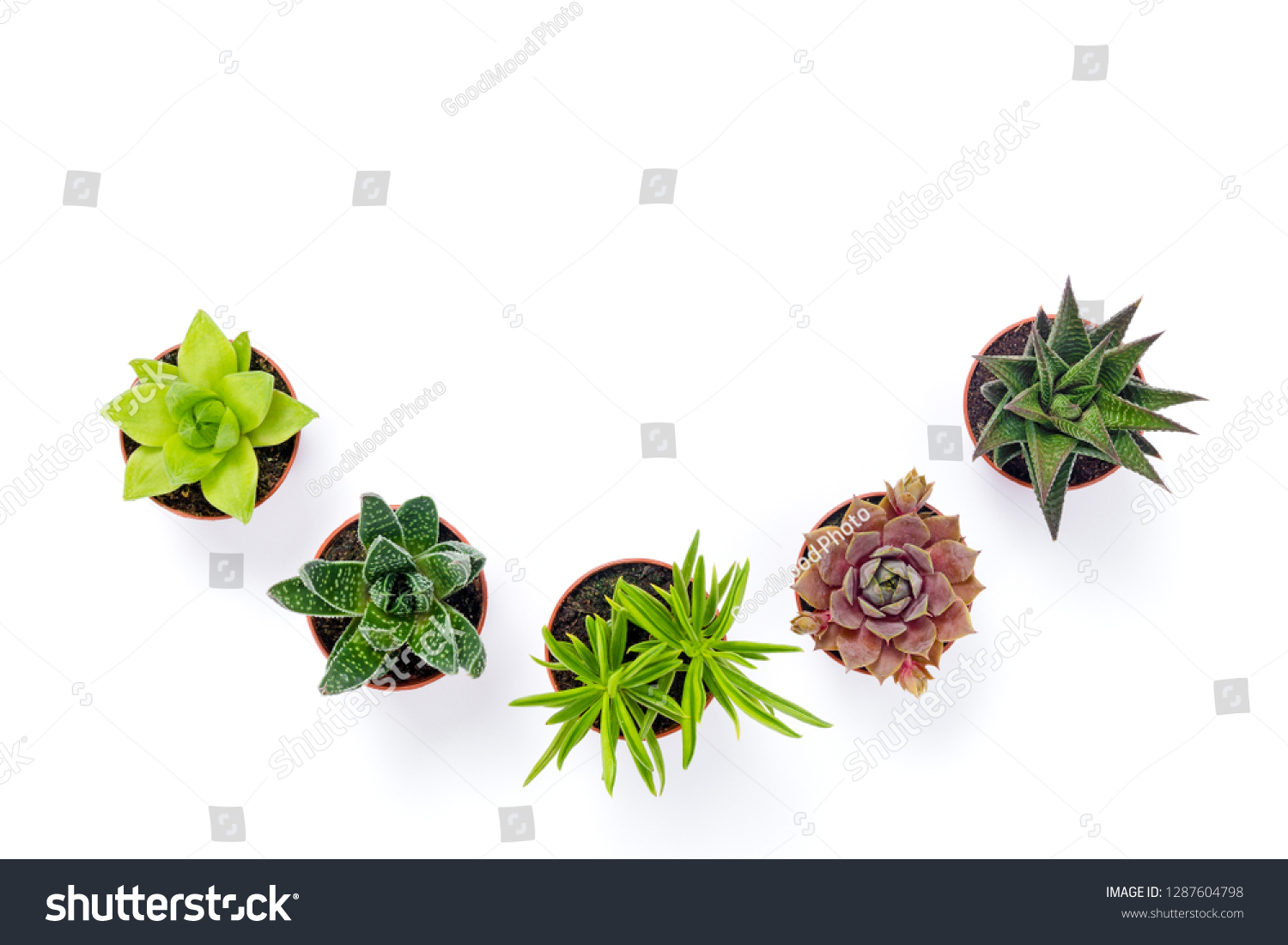 Little Potted Succulent Plants Isolated On Stock Photo Edit Now 1287604798