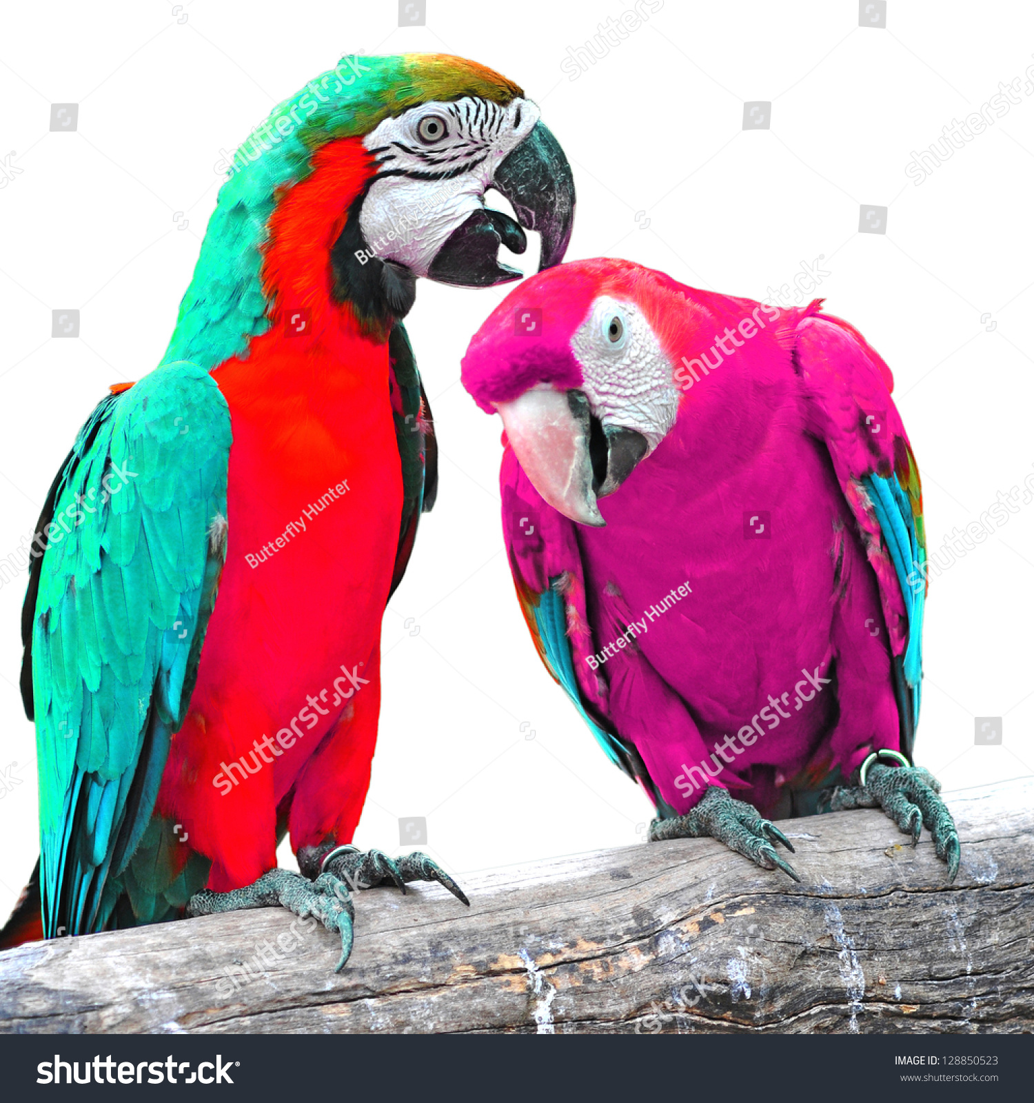 beautiful colorful parrot bird on white stock photo 128850523