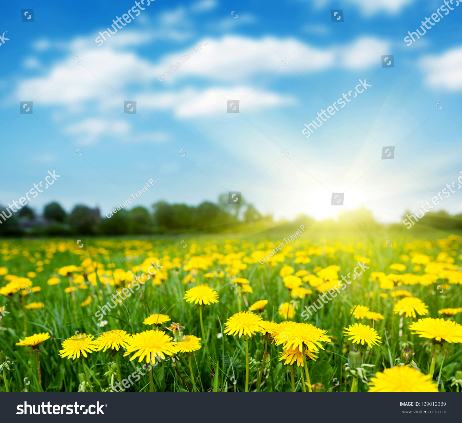 LET'S CHAT! - Page 2 Stock-photo-spring-field-with-dandelions-on-bright-sunny-day-129012389