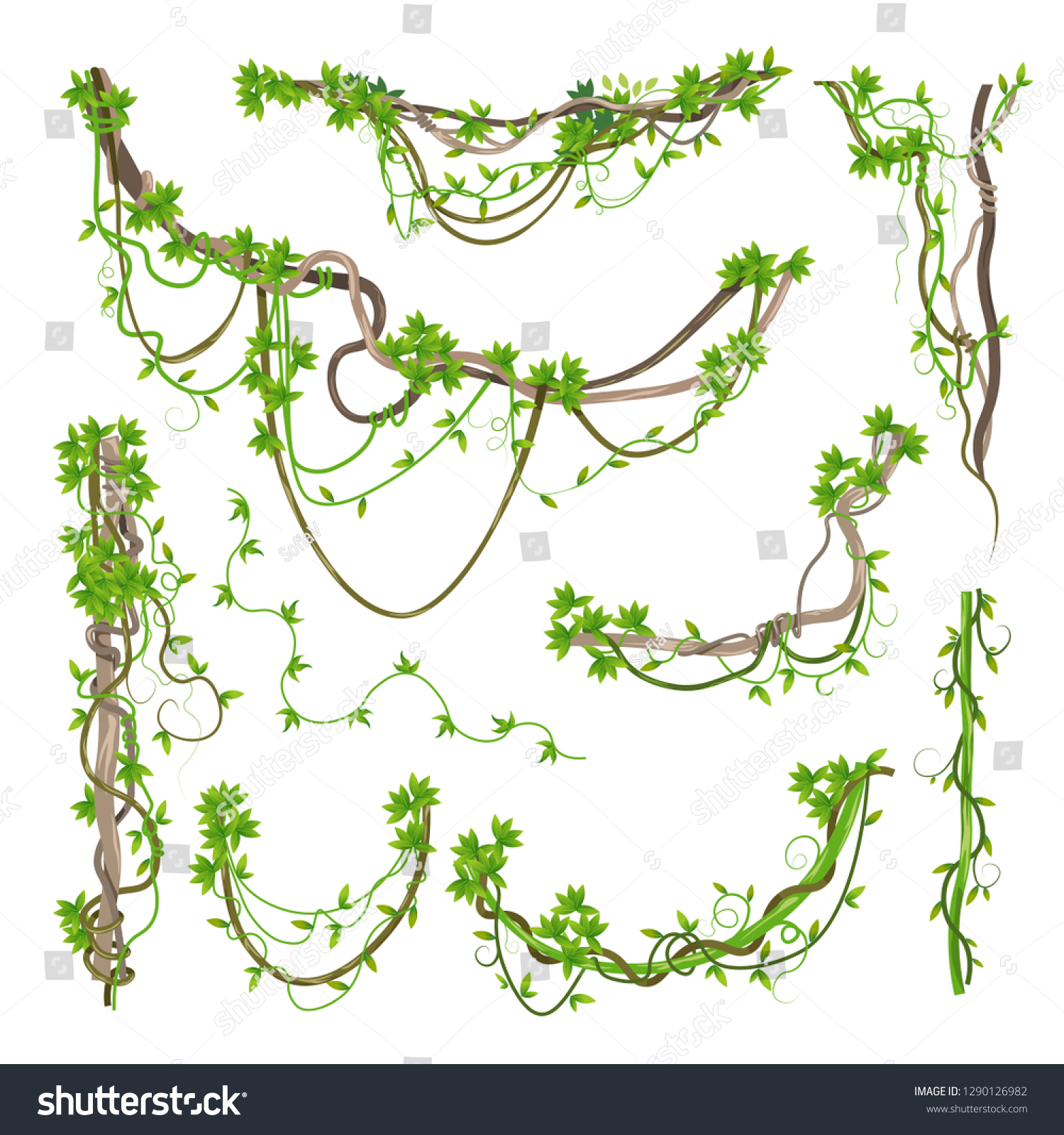 Liana or jungle plant or vine wild greenery winding branches vector stem with leaves isolated decorative elements tropical vines rainforest flora and exotic botany wild curling species and twigs.