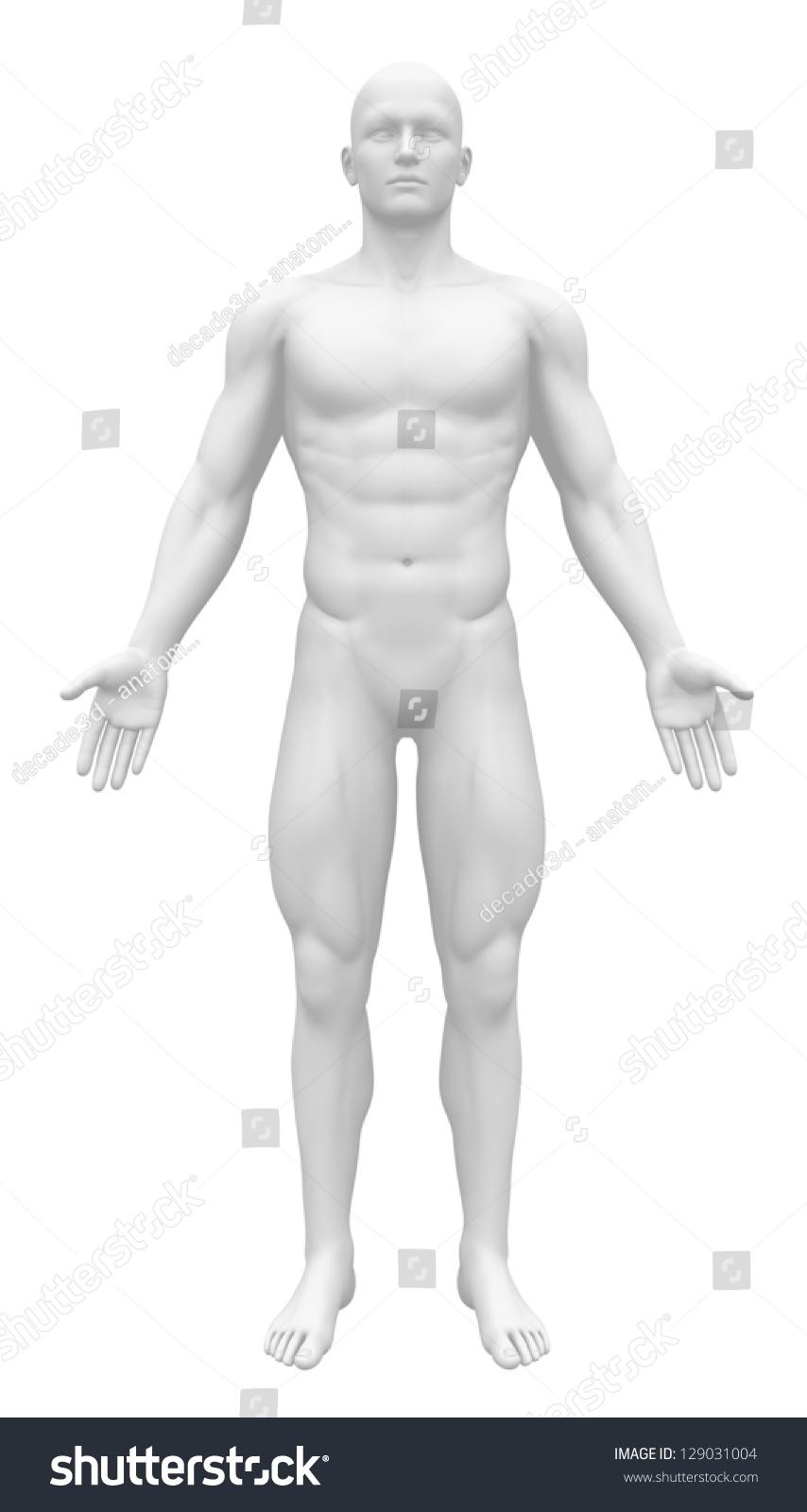 Blank Anatomy Figure White Male Body Stockillustration 129031004