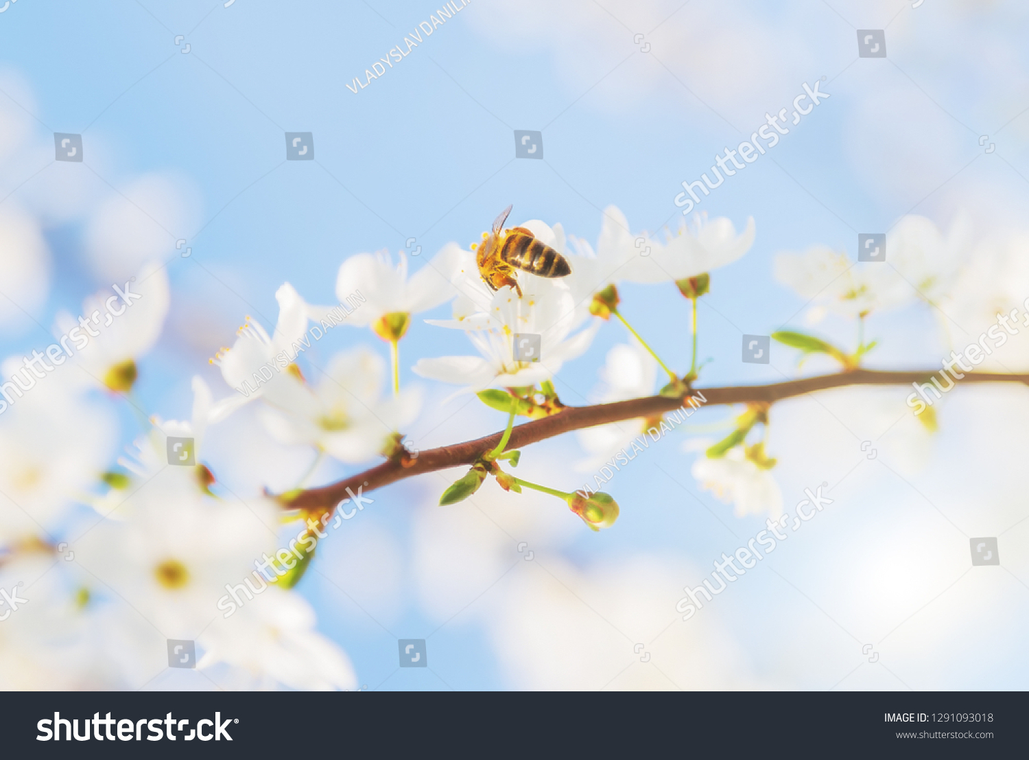 Nature 10x8 FT Vinyl Photography Backdrop,Sweet Honey Bees Wax Abstract Insect of Spring Season Artwork Image Background for Baby Birthday Party Wedding Studio Props Photography