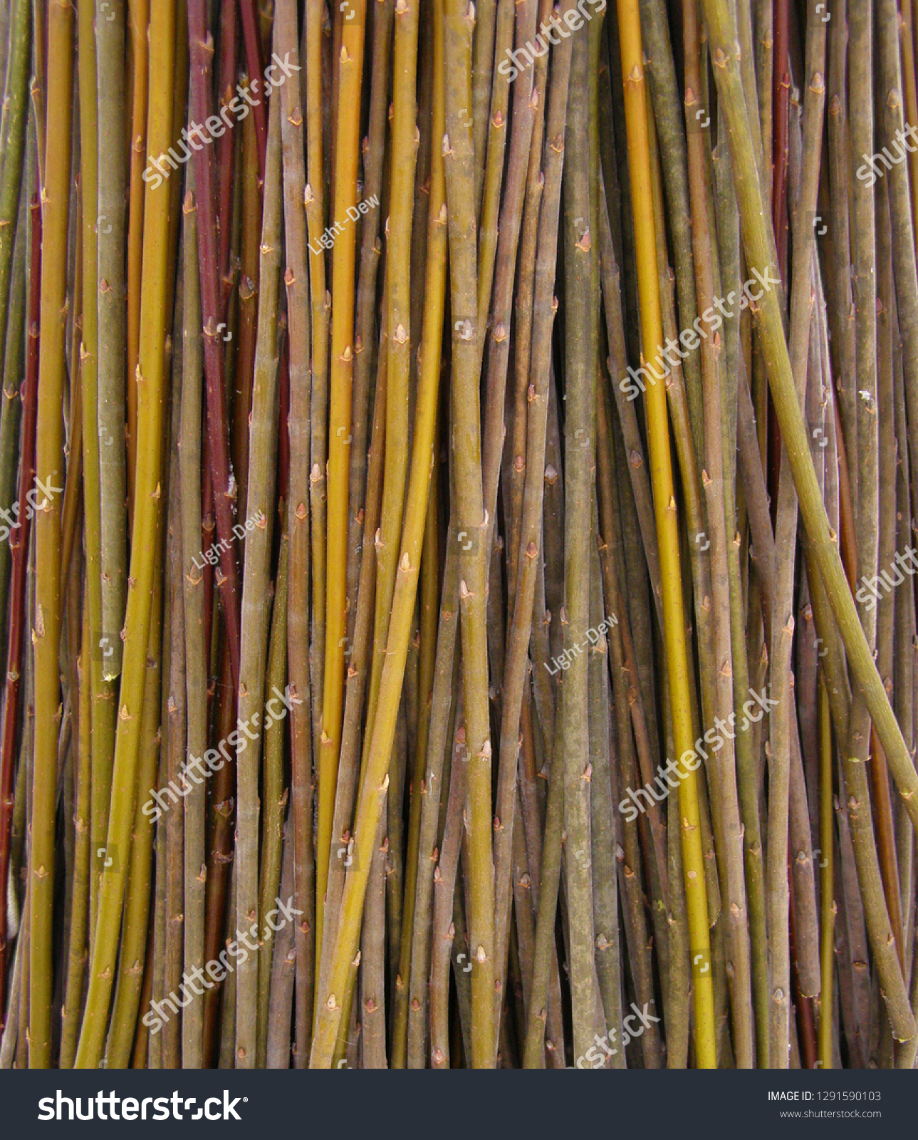 Willow Twigs Raw Material Basket Weaving Stock Photo Edit Now 1291590103
