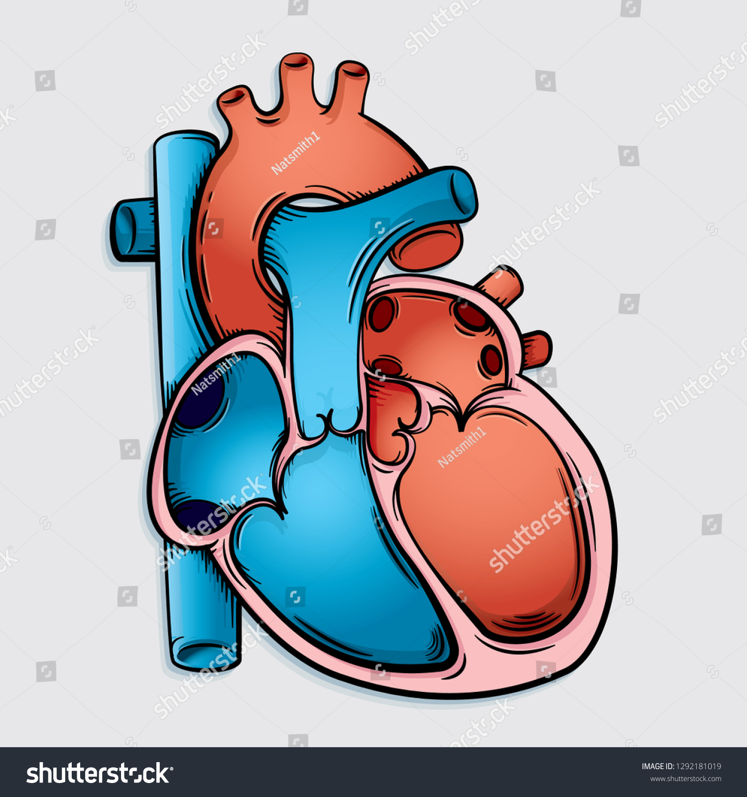 Vector Drawing Simple Heart Anatomy Easy Stock Vector Royalty Free