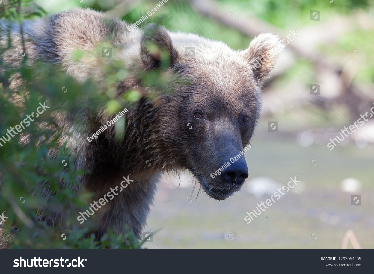 stock-photo-close-up-head-of-brown-wild-