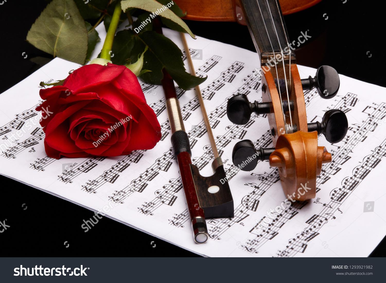 St Petersburg Russia November 2016 Violin Fiddle Stock Photo