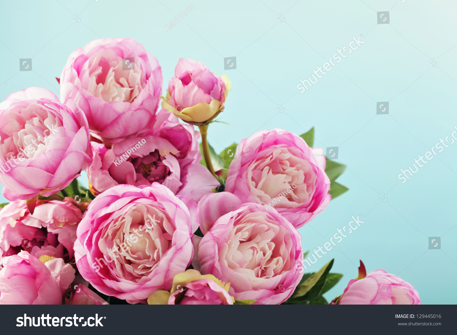 Pink Peony Flowers Stock Photo Edit Now 129445016 Shutterstock
