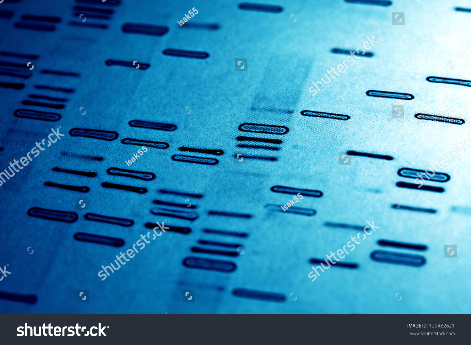 term paper on dna fingerprinting The technique of dna fingerprinting, which involves comparing samples of human dna left at a crime scene with dna obtained from a suspect, is now considered the most reliable form of identification by many investigators and scientists since its development in the 1980s.