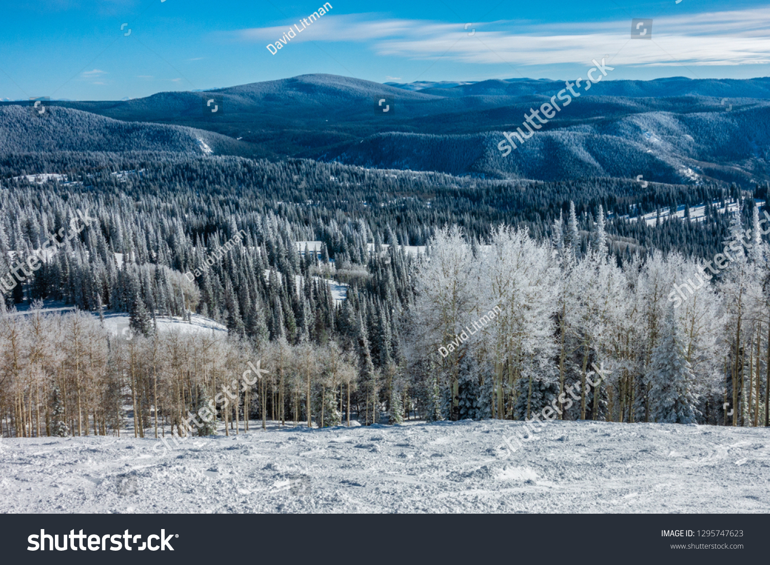 The ski slopes of Steamboat Springs ski resort, on Mount Werner in the Rocky Mountins of Colorado,  are lined by snow covered Aspen and Pine trees during a snowy winter season.