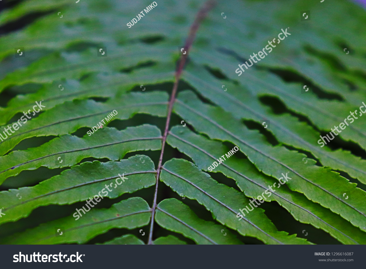 Green Fern Tropical Leaves Leaf Arrangement Stock Photo Edit Now 1296616087 Collection of tropical leaves free vector. shutterstock