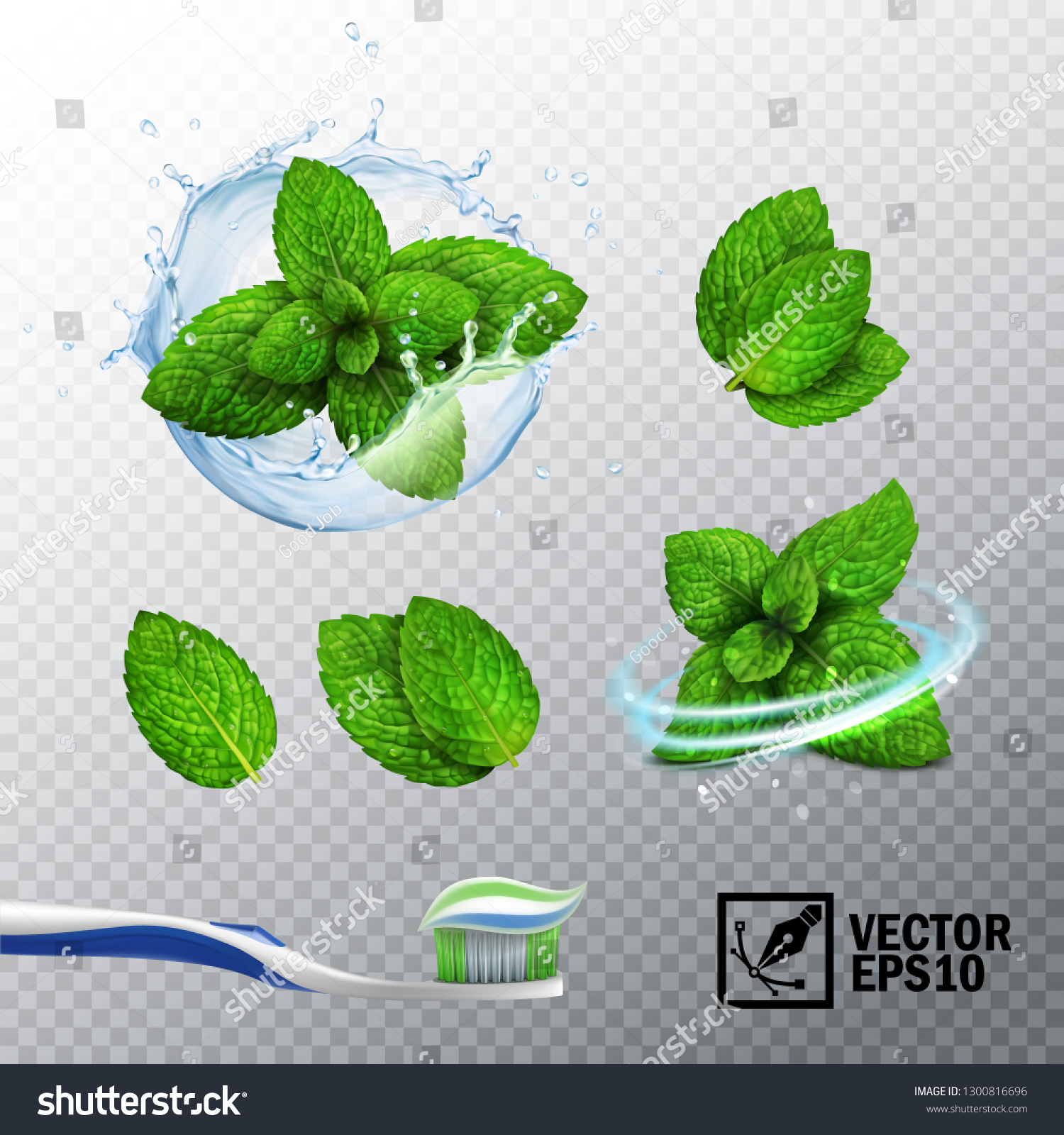 3D realistic vector set, transparent splash of water with a mint sprout, various options for mint leaves, a fresh whirlwind, a toothbrush with a paste #1300816696