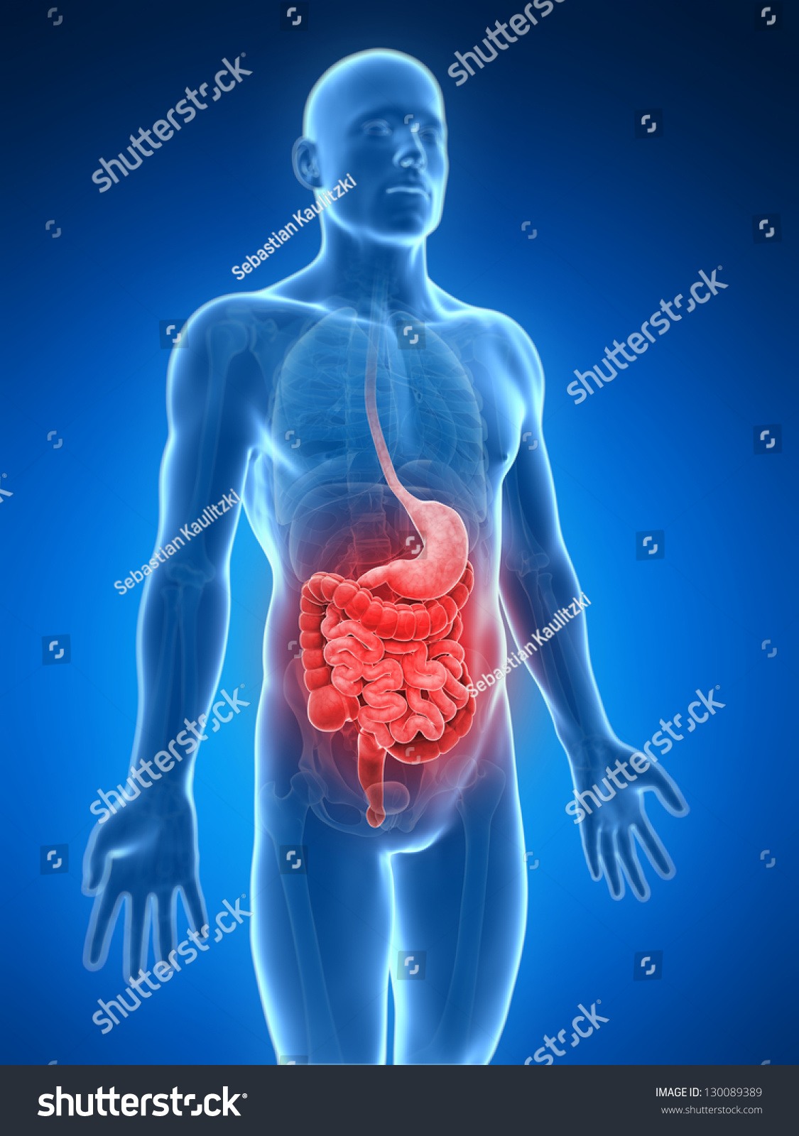 3 D Rendered Illustration Painful Belly Stock Illustration 130089389 ...