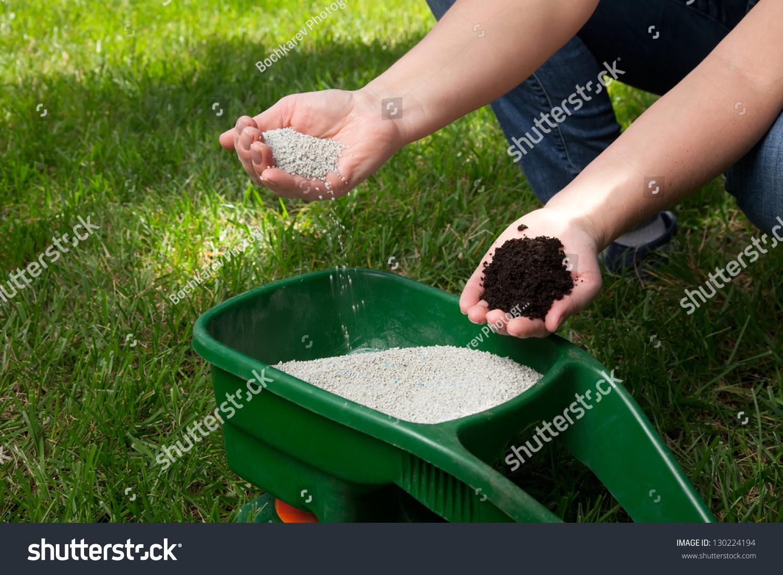 Как правильно посеять и посадить газон на даче своими руками 65