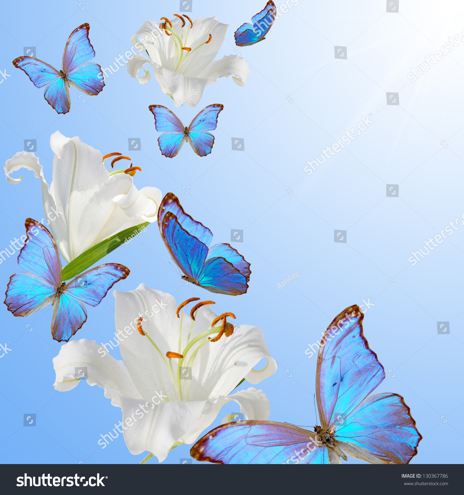 blue butterflies liliesjpg - photo #8