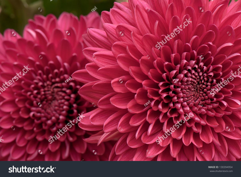 Beautiful Background Fresh Flowers Photographed Studio Stock Photo