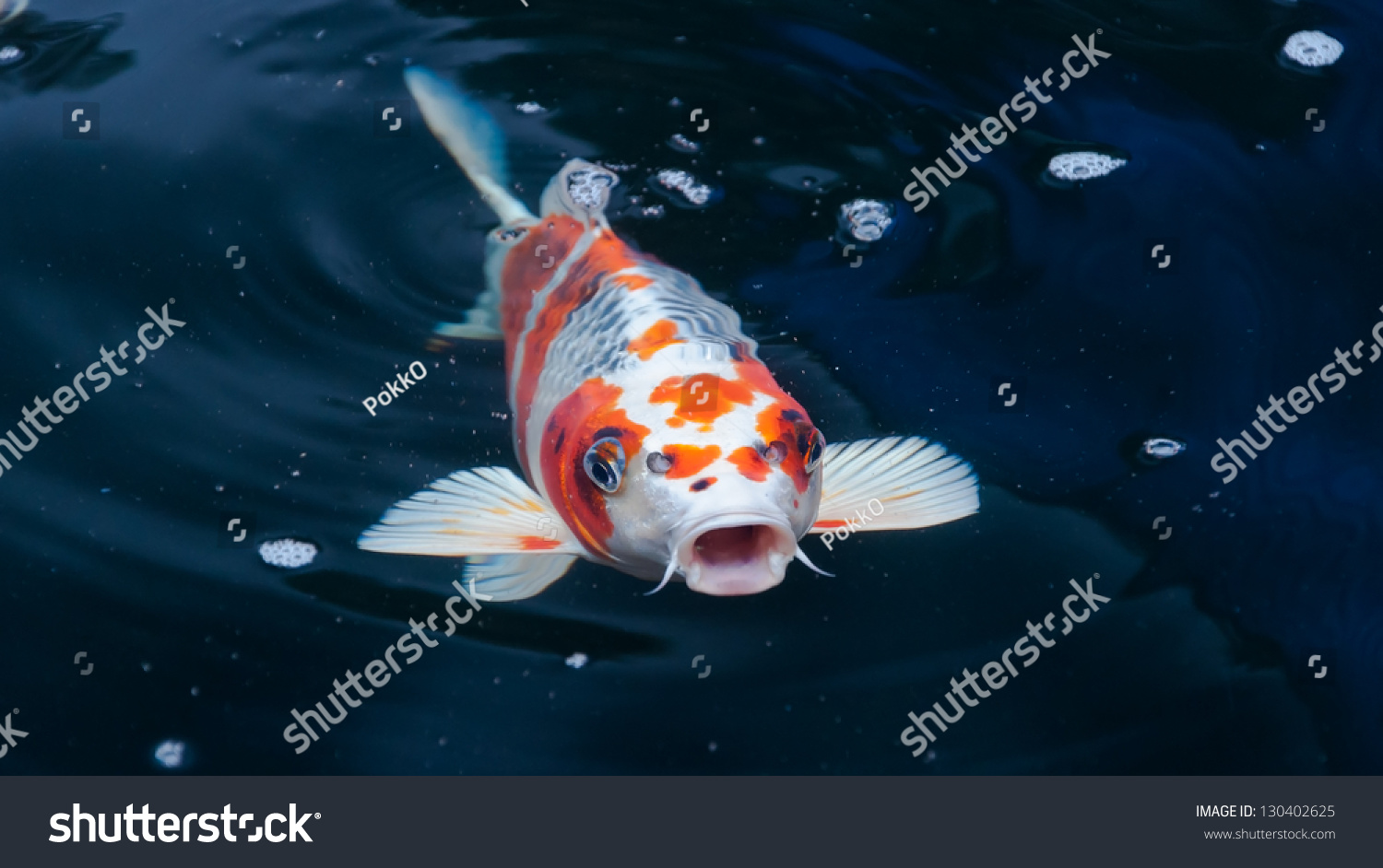 Koi fish swimming pond stock photo 130402625 shutterstock for Fish swimming video