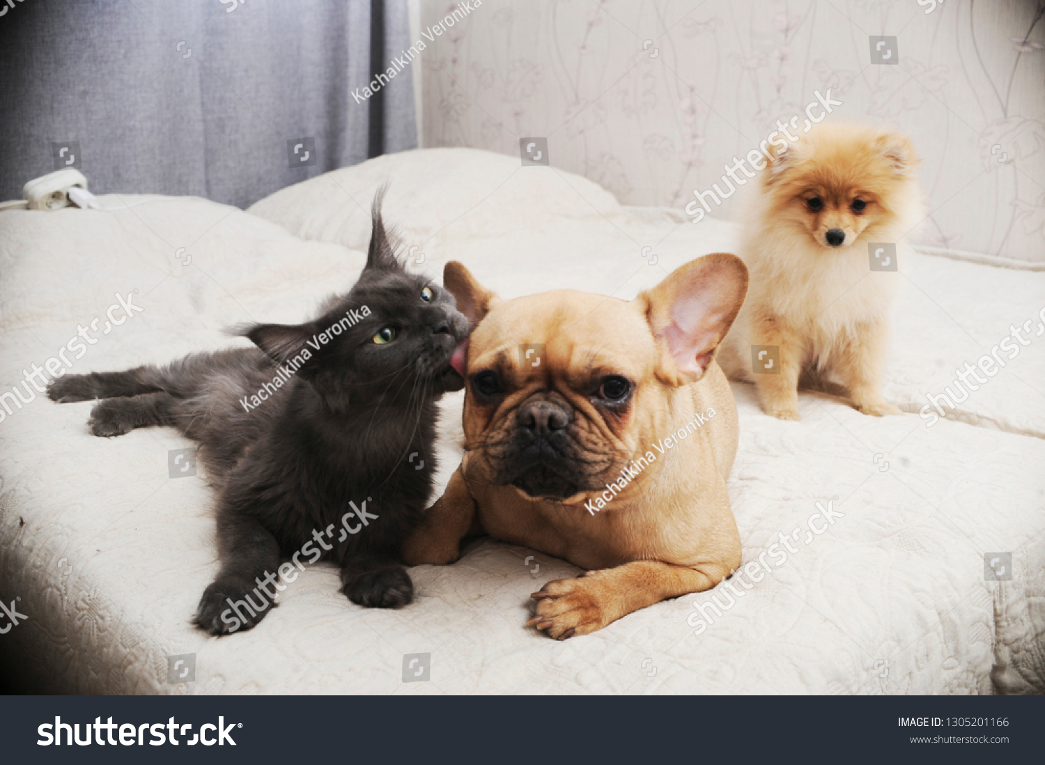 Adorable Dogs Cute Cat Lying Together Stock Photo Edit Now 1305201166