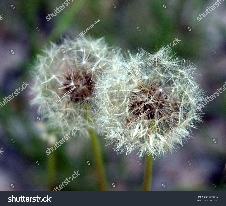 Wish Flower Stock Shutterstock