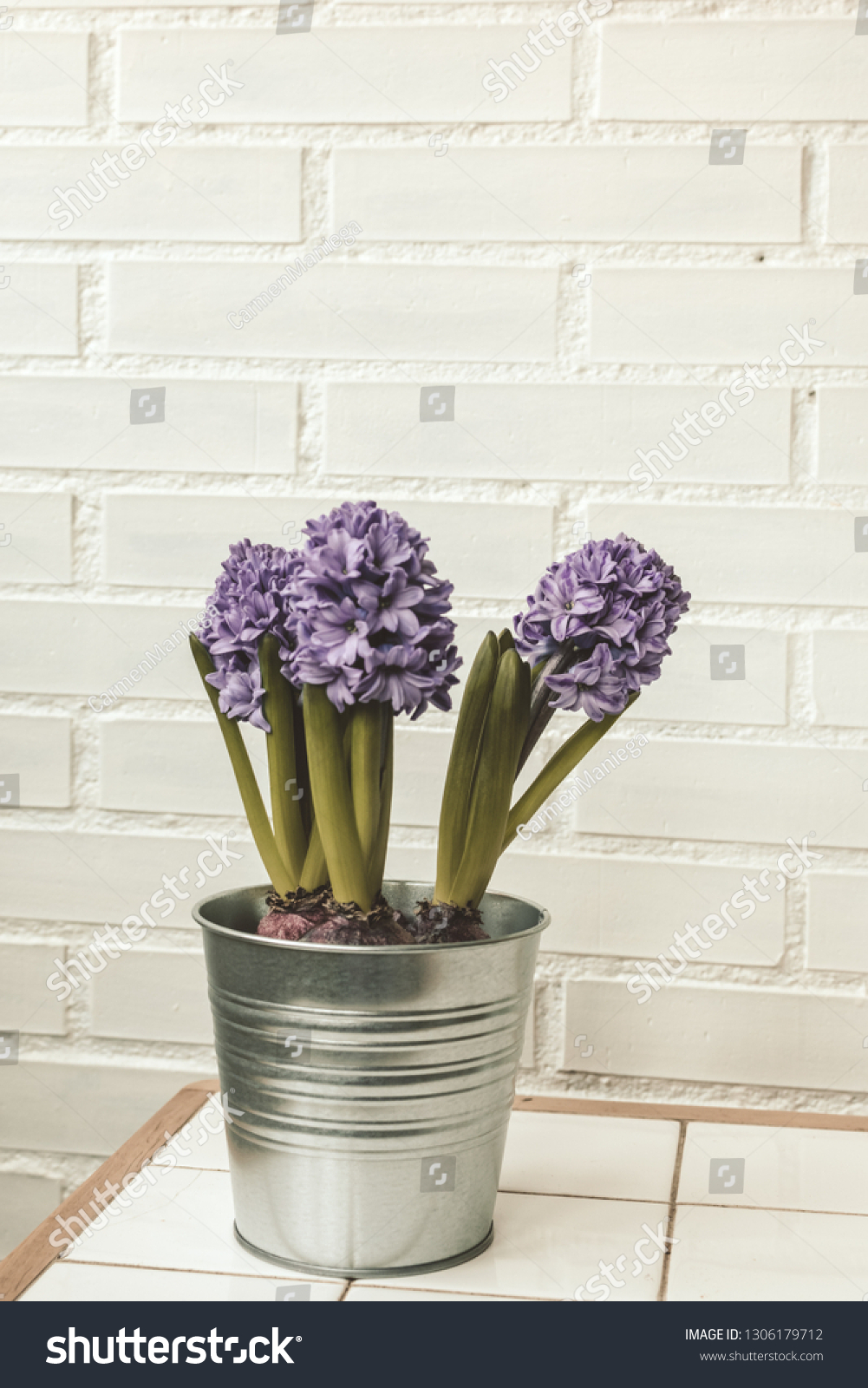 Shutterstock & Jacinth Flowers Indoor Plant Metal Pot Stock Photo (Edit Now ...