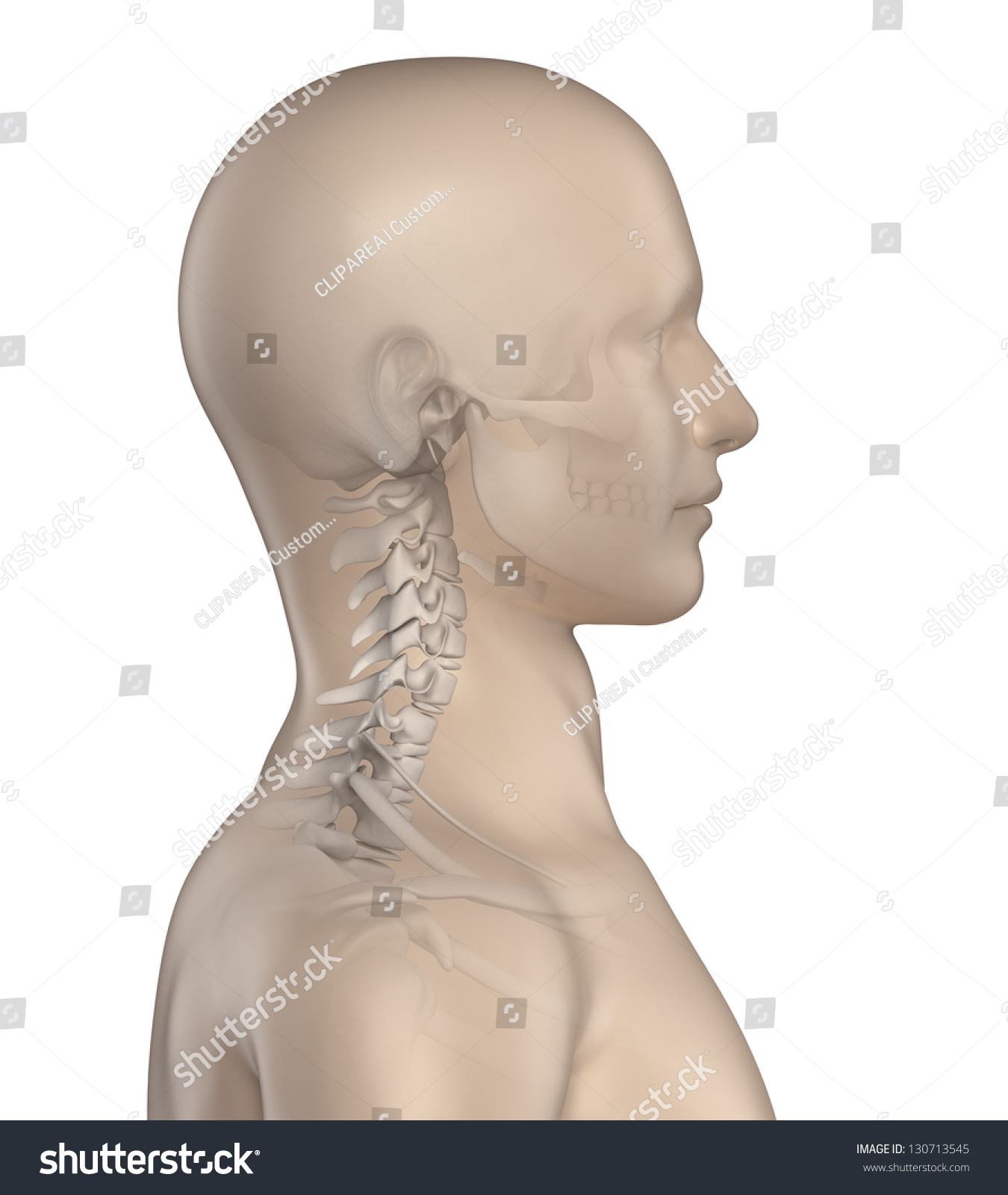 Royalty Free Stock Illustration Of Kyphotic Spine Cervical Region