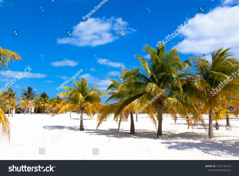 palm grove with white sand on Cayo Largo Island. Caribbean. Cuba