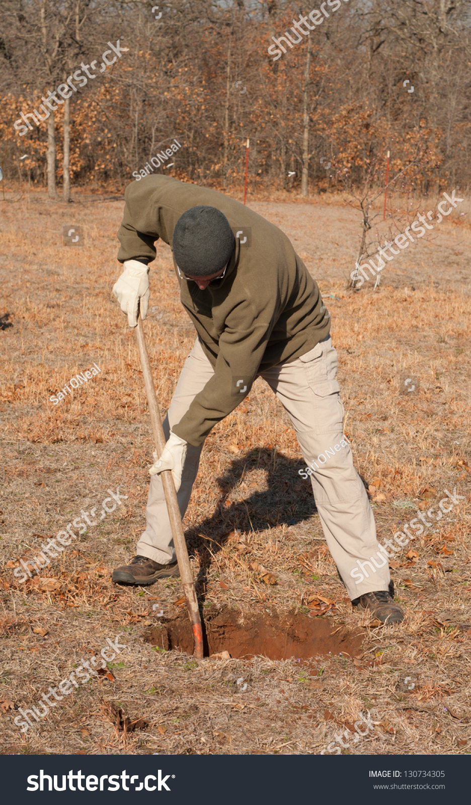 Man Digging Hole Ground Plant Tree Stock Photo 130734305 ...