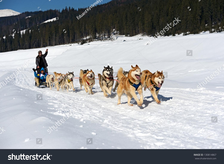 husky dog sled run snow stock photo 130814867 shutterstock