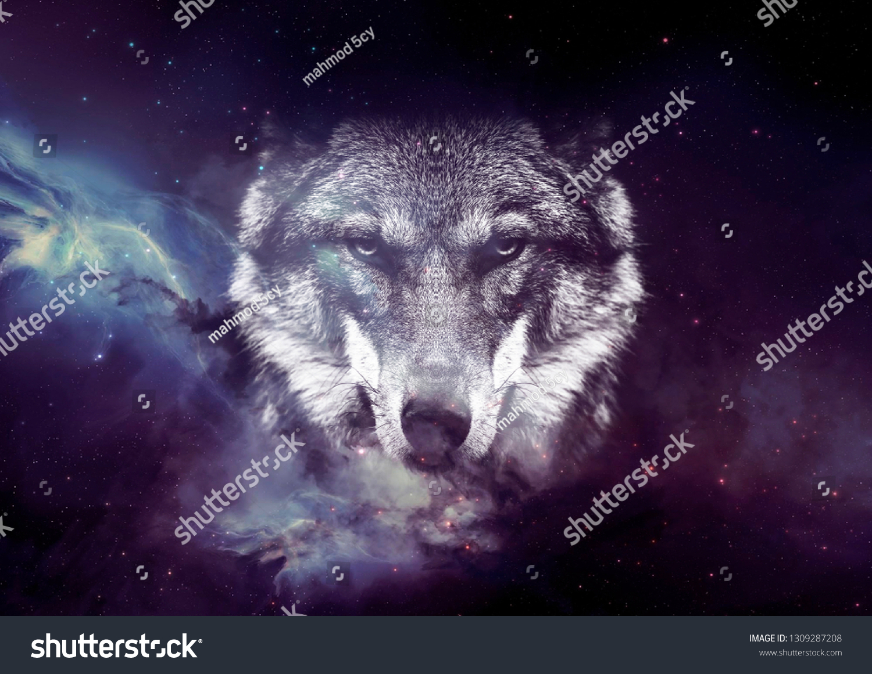 stock photo galaxy wolf face wallpaper 1309287208