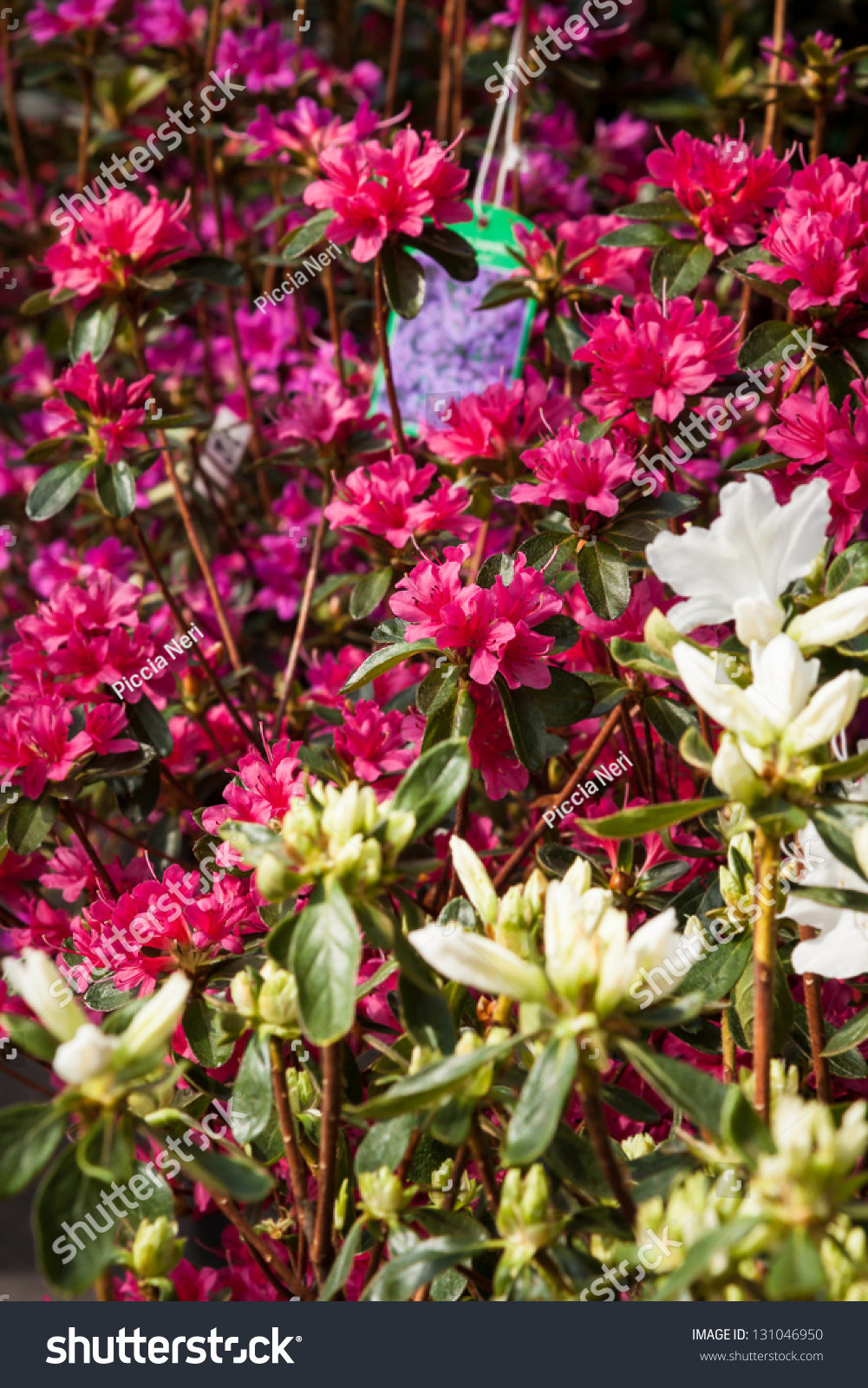 Beautiful Spring Flowers Sale Street Market Stock Photo Edit Now