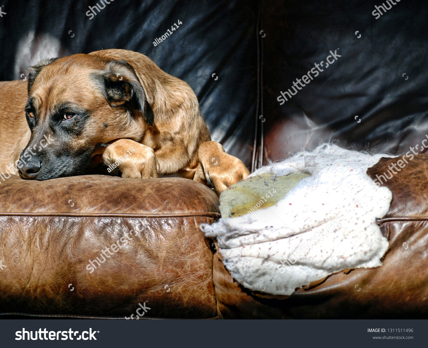 stock-photo-guilty-dog-next-to-a-hole-sh