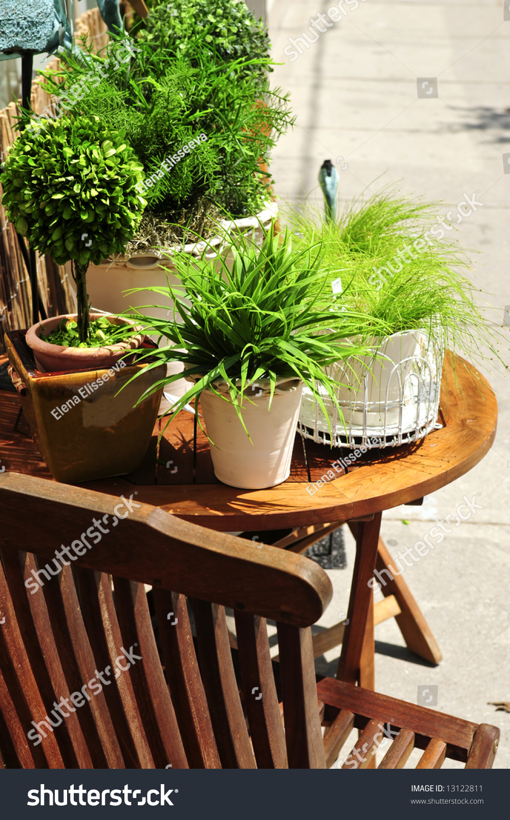 Potted Green Plants On Wooden Patio Stock Photo 13122811
