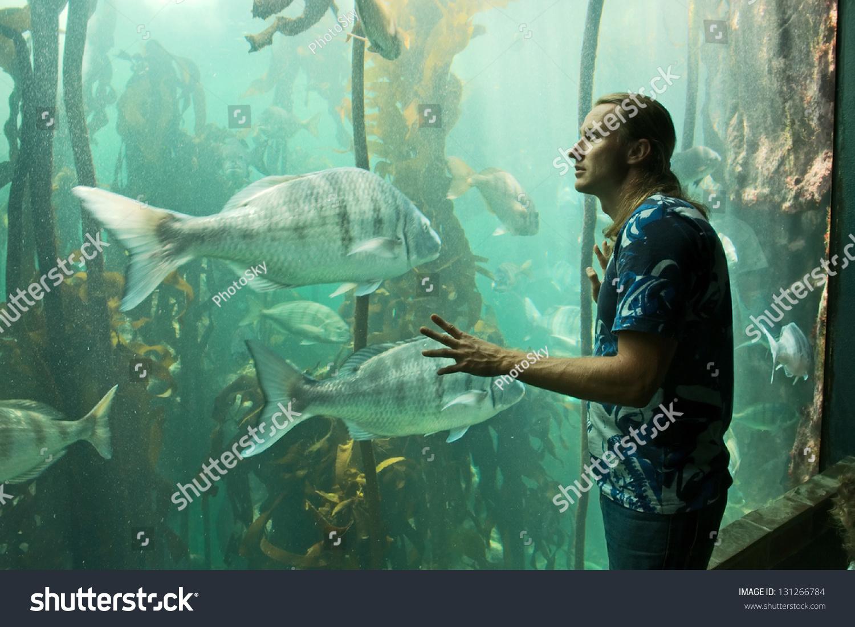 Aquarium fish tank in south africa - Young Man Looks At Fish Tank Shot In Cape Town South Africa