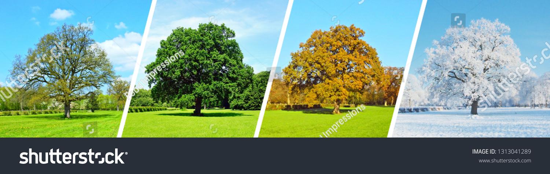 Park Tree Panorama - Four Seasons #1313041289
