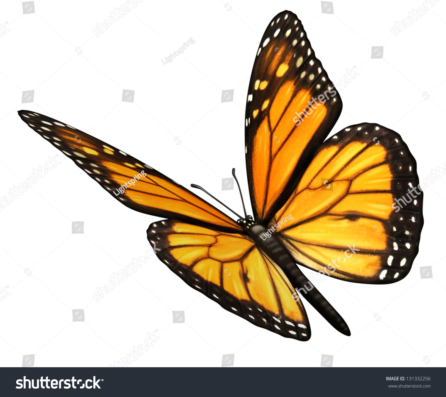 Monarch butterfly isolated on white background stock illustration monarch butterfly isolated on a white background angled in a three quarter view with open wings buycottarizona