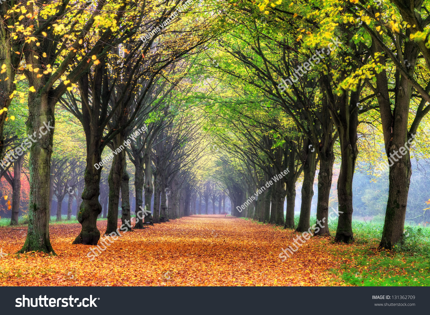 Beautiful Colored Trees Het Amsterdamse Bos Stock Photo (Royalty ...