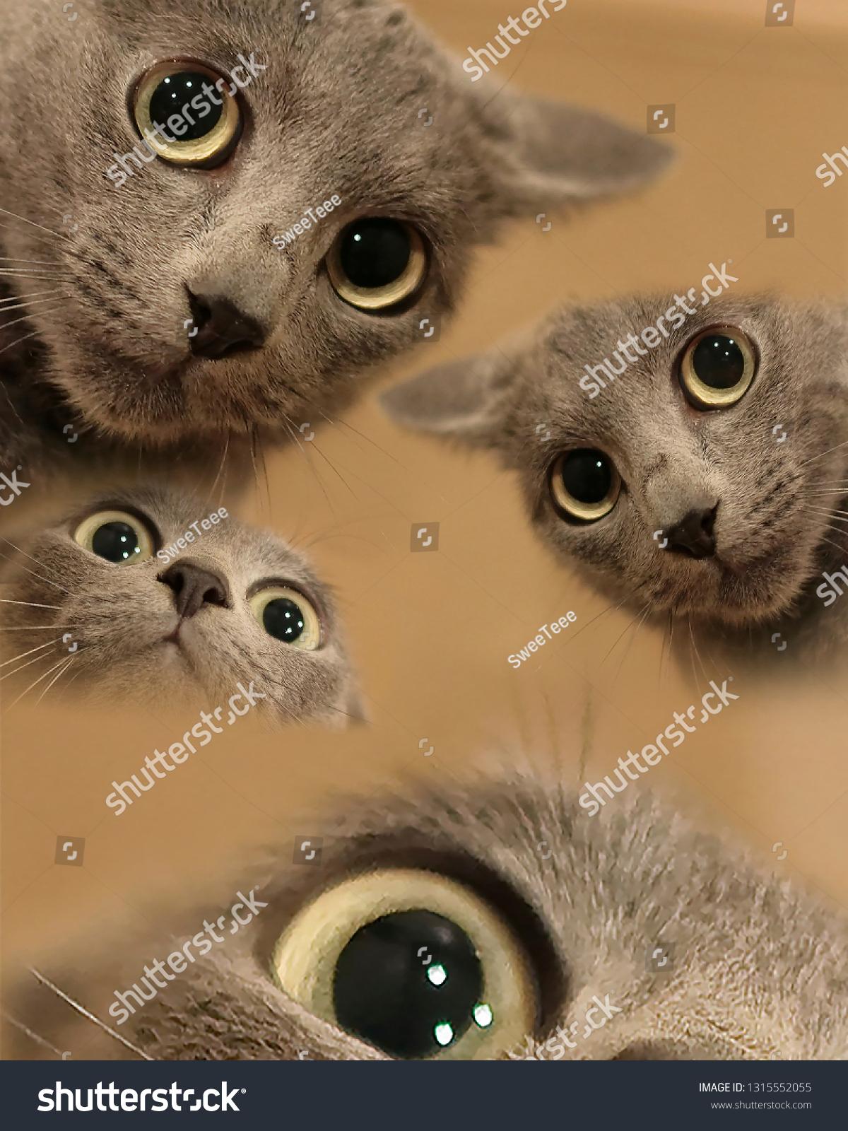 Funny Cat Meme Miscellaneous Stock Image 1315552055