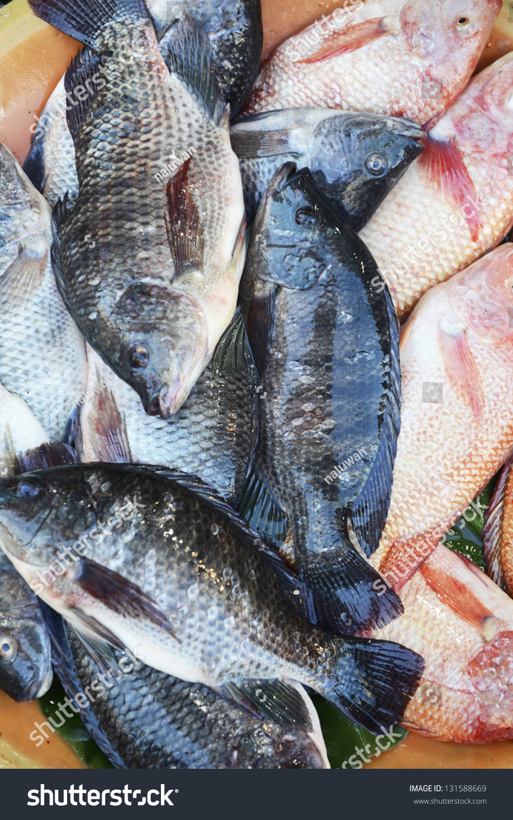 Newly catch bunch of tilapia fish on the market stock for What type of fish is tilapia