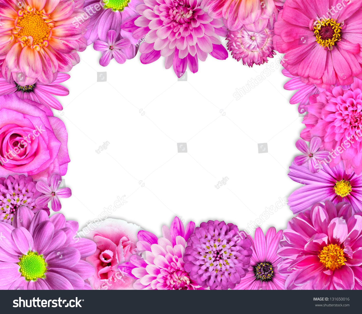 flower frame with pink purple red flowers isolated on white background selection of