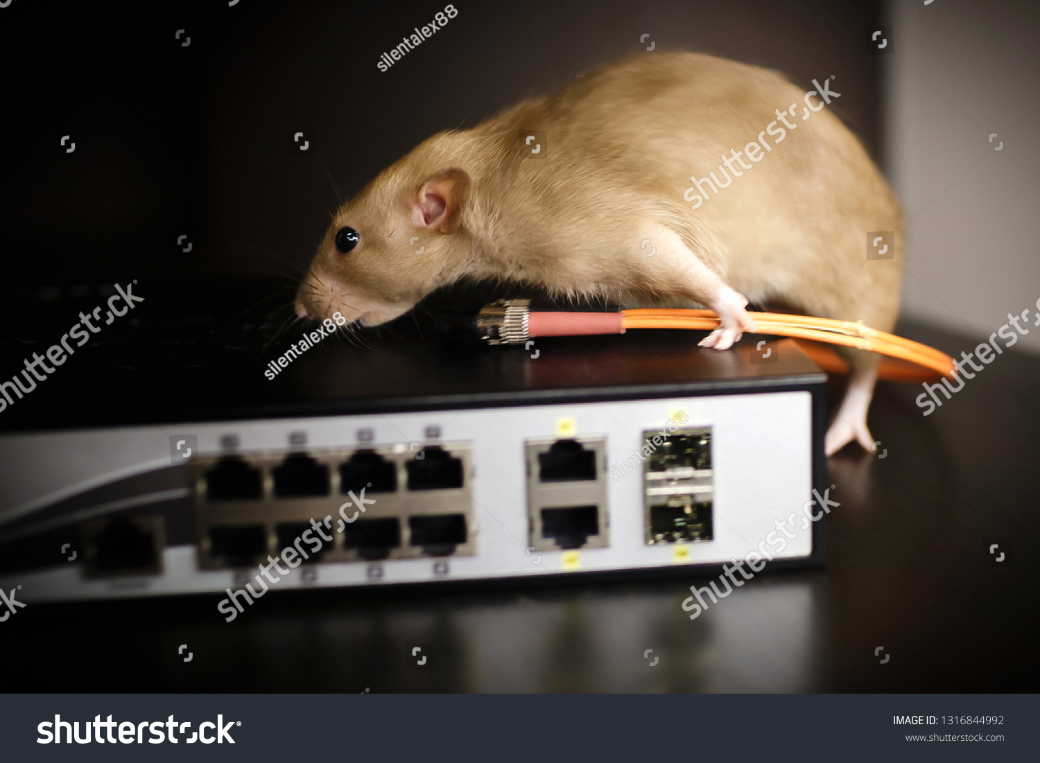 Damaged Wires Internet Connection Rat Gnawed Stock Photo