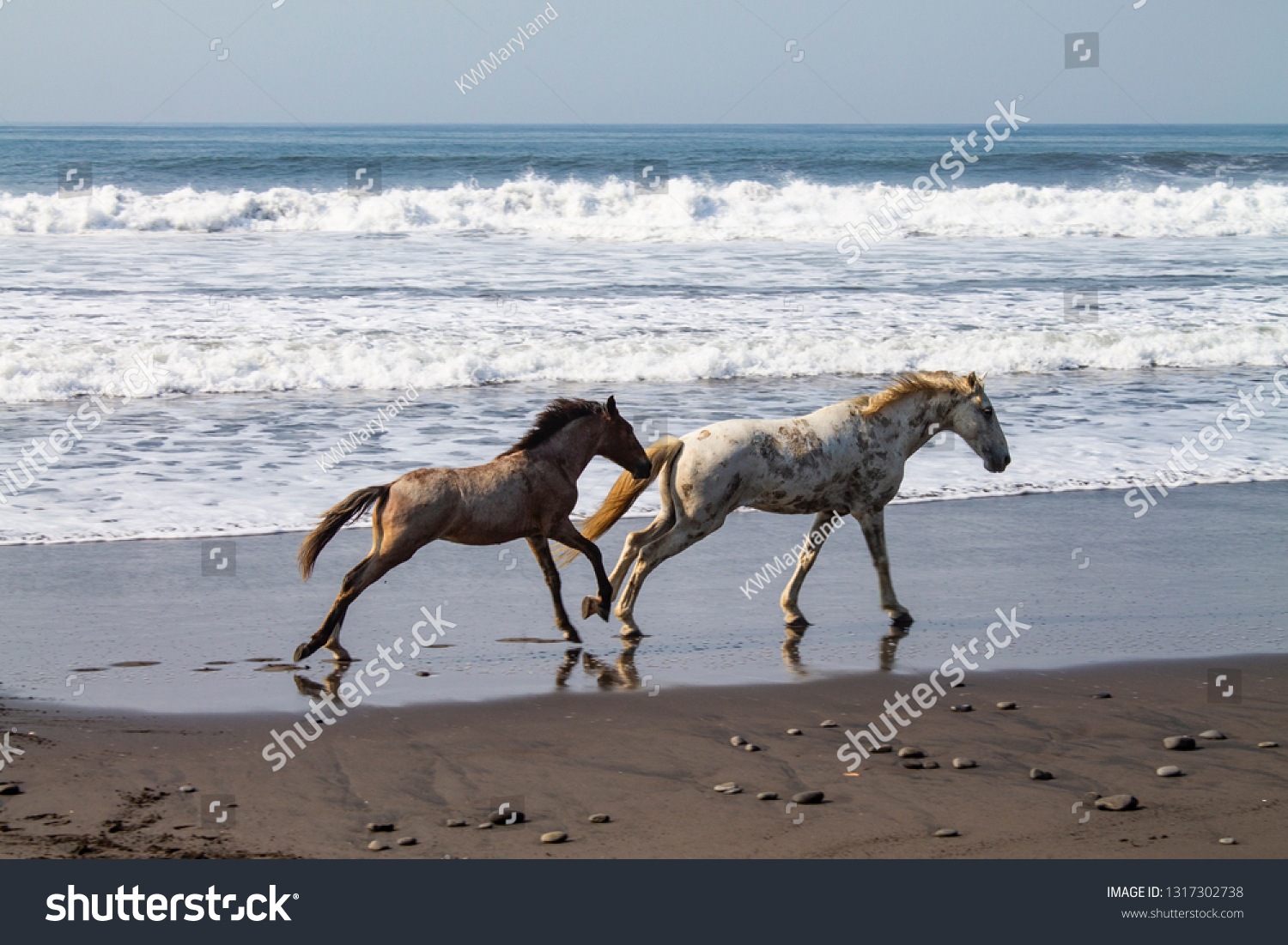 Wild Horses Running On Beach Together Stock Photo Edit Now 1317302738