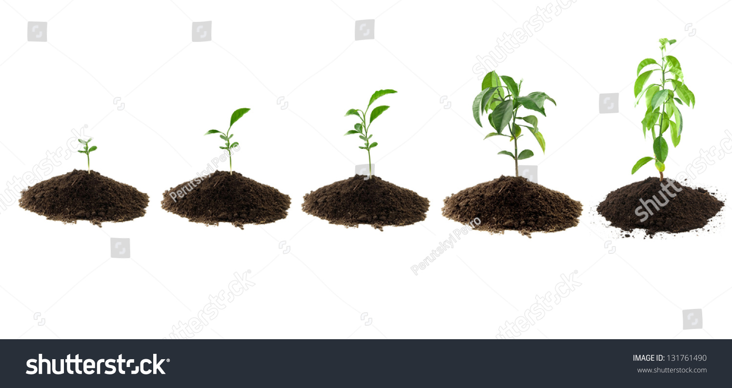 Plants lemon green and soil stock photo 131761490 for Soil and green