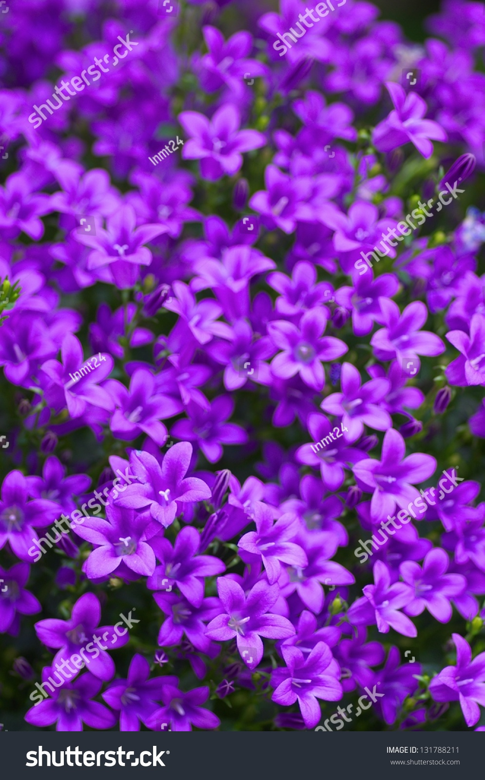 small purple flowers stock photo   shutterstock, Beautiful flower