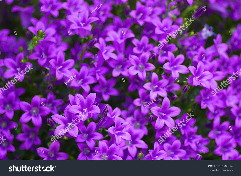 Small Purple Flowers Stock Photo Edit Now 131788214 Shutterstock