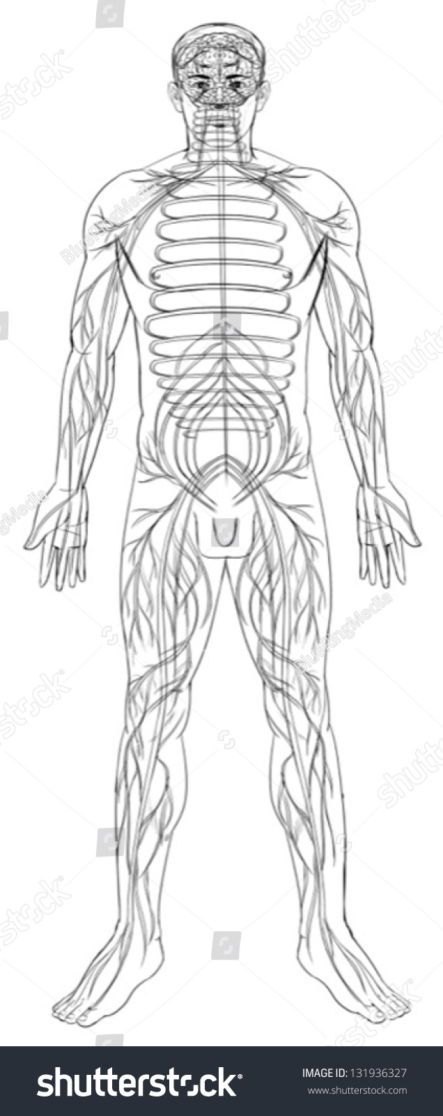 outline of the nervous system The outline for the nervous system is very large, so i've split it into two parts: part 1 and part 2 pretty easy to follow so far, eh do the overview on this page first, then navigate to nervous system 1.